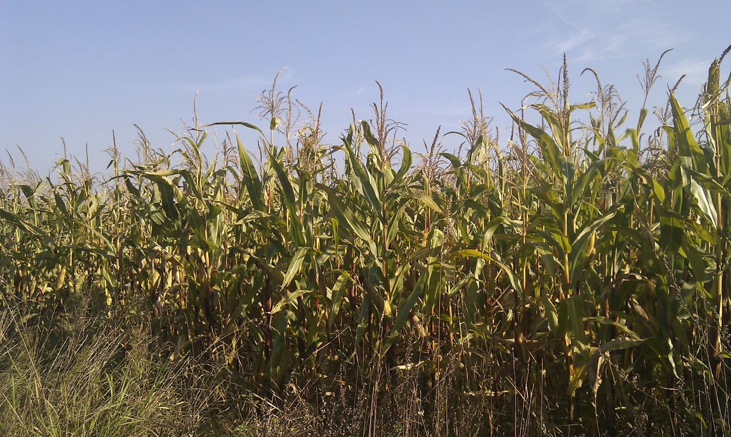 Subsidisation of biogas from maize silage not justified